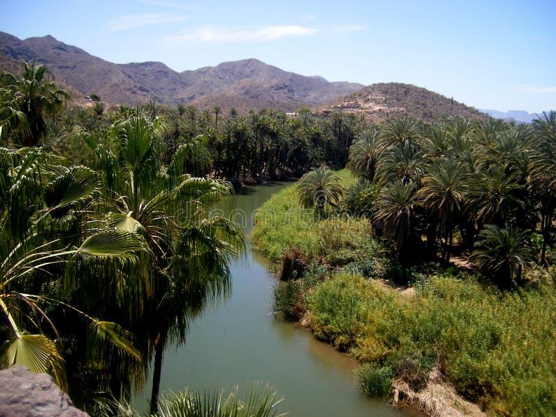 Oasis in Mulege, Baja California stock photo