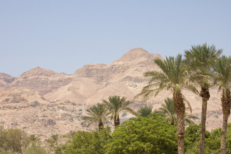 Oasis in Negev royalty free stock photo