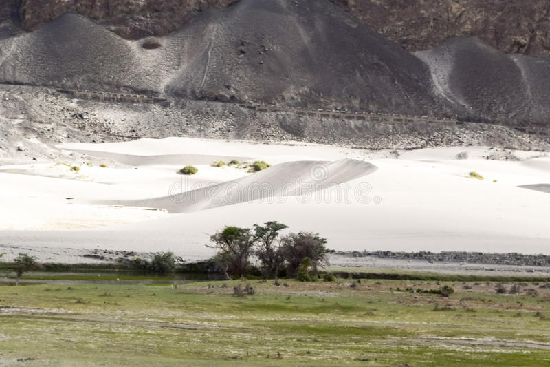 Oasis in nubra valley cold desert. Sand dunes of nubra valley a high altitude cold desert of himalaya in ladakh region royalty free stock photography