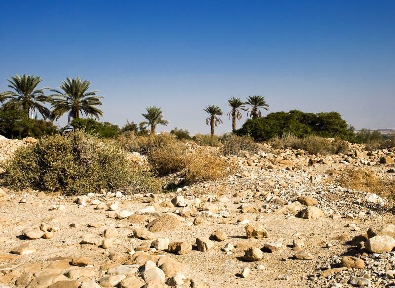 Oasis sur le désert photo stock
