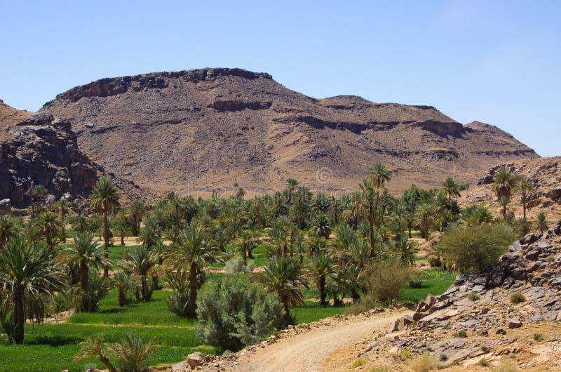 Oasis verde en Marruecos foto de archivo