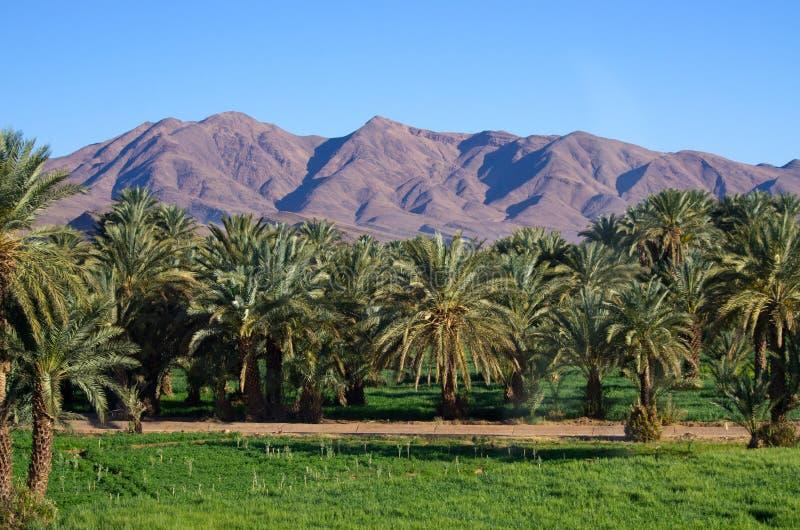Oasis verde en Marruecos imagenes de archivo
