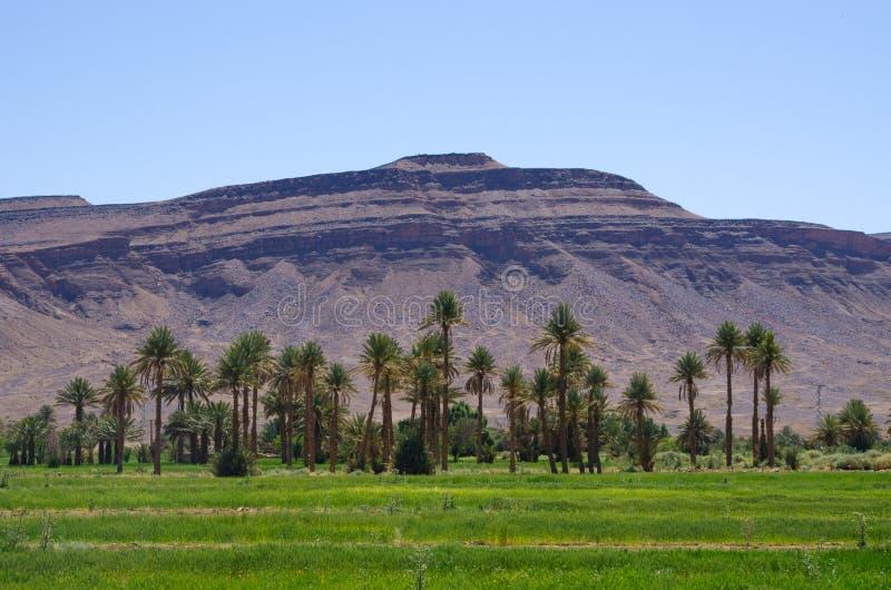 Oasis verde en Marruecos imágenes de archivo libres de regalías