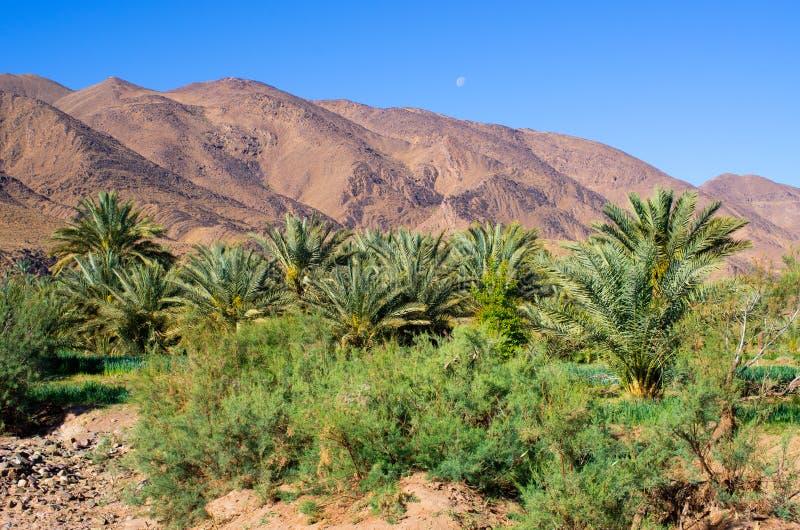 Oasis verde en Marruecos imagen de archivo