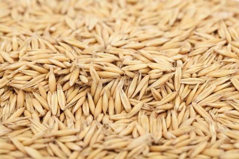 Download Oat stock image. Image of grain, macro, white, brown - 22771405