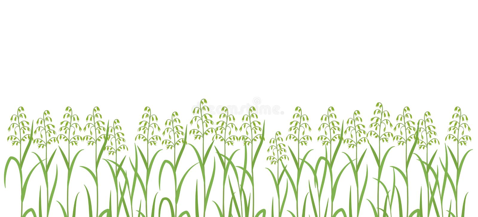 Oat plant green field. Horizontal banner. Avena sativa. Cereal grain. Place for text. Copy space. Harvest agricultural. Vector background. Agronomy clipart stock illustration