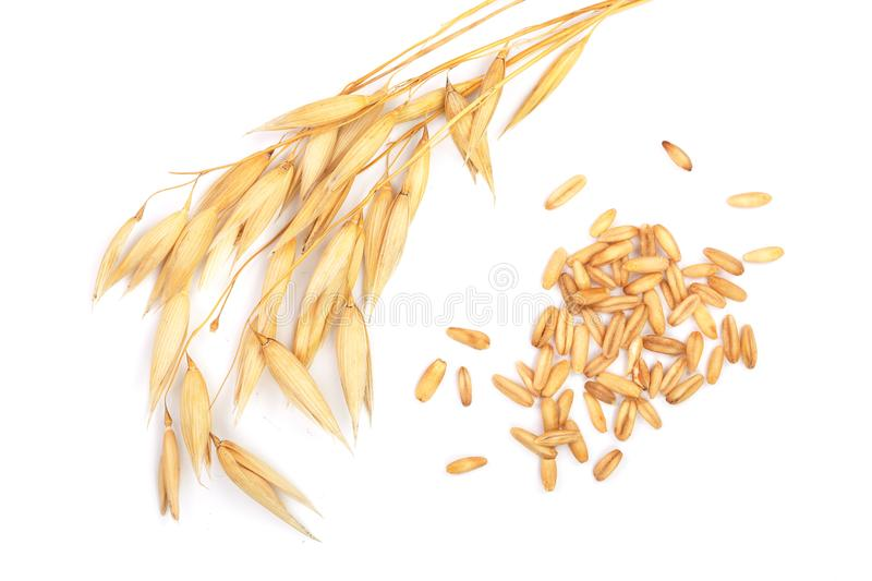 Oat spike with grains isolated on white background. Top view. Flat lay stock images