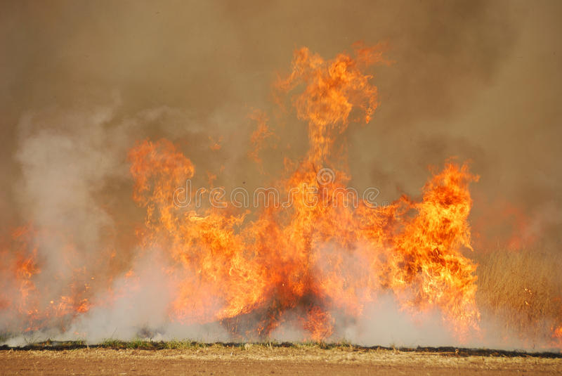 Download Oat Stubble Fire stock photo. Image of wildfire, glowing - 25378590