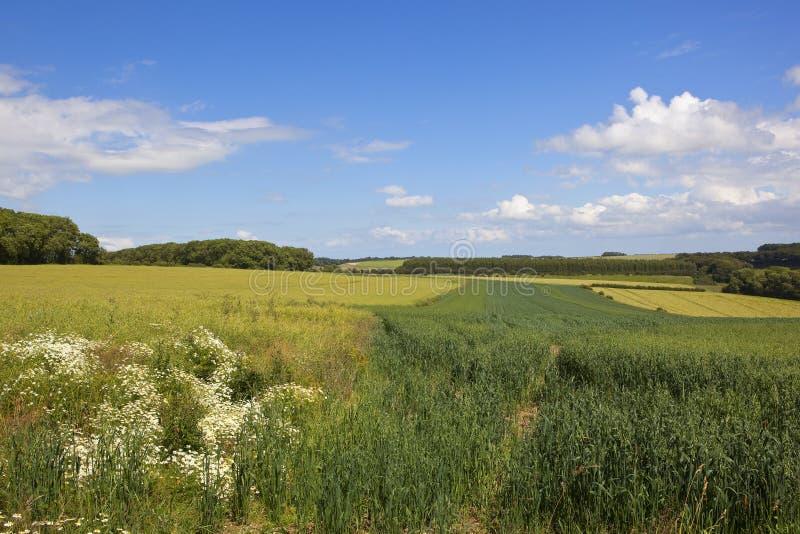 Surrounded By Canoloa Feilds Quotes: Canola Farmland Stock Photo. Image Of Farming, Farm