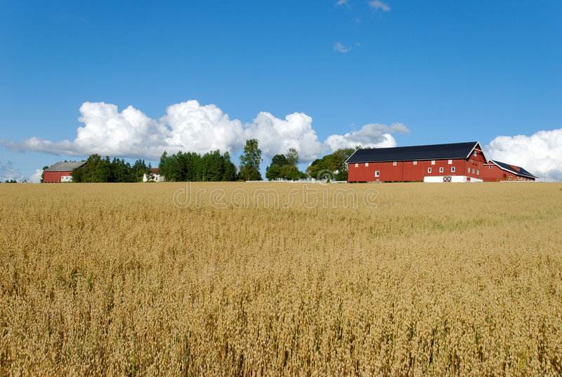 Download Oats Field And Farm Horizontal Stock Image - Image: 6248207