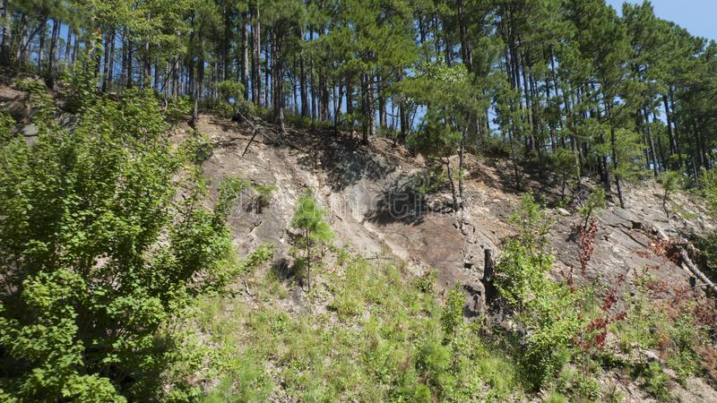 Rocky terrain and stately pines in eastern Oklahoma. The Oauchita Mountain range is one of the few that runs east to west in the United States. The layers of royalty free stock photos