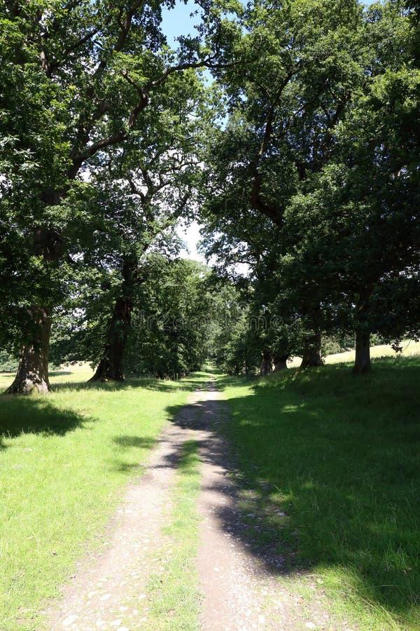 Oavlad landbana genom en väg av gamla ekträd royaltyfria bilder