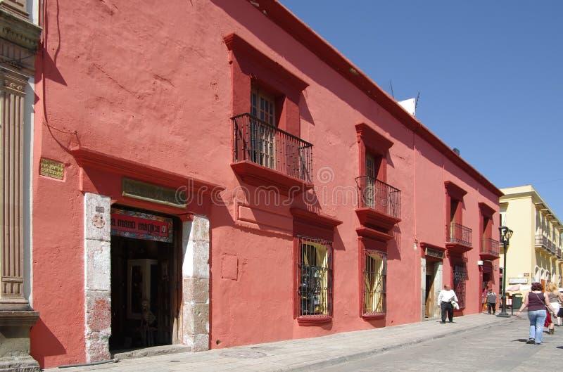 Oaxaca gata royaltyfri fotografi