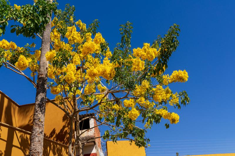 Flowering nature in Zocalo quarter at Oaxaca, Mexico. In Oaxaca historic quarter, you can find various restaurants and peaceful cafes. Colourful houses of Zocalo royalty free stock photography