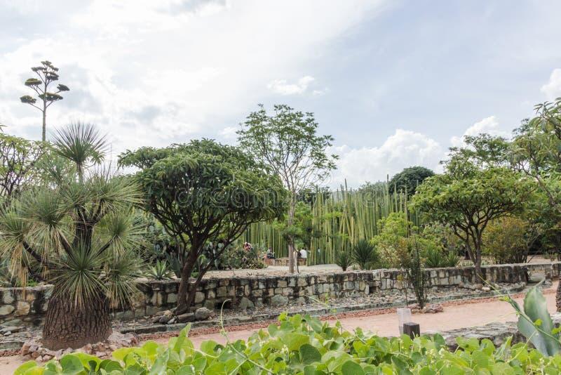 Ethnobotanic garden in Oaxaca Mexico. Oaxaca, Oaxaca / Mexico - 21/7/2018: Detail of the Ethnobotanic garden in Oaxaca Mexico stock photos