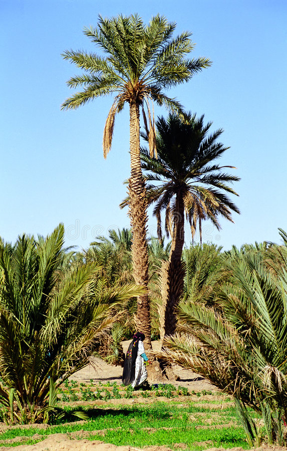 oaza zdjęcie stock