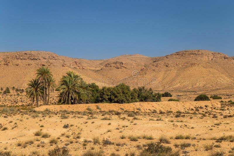 Oaza w pustyni fotografia stock
