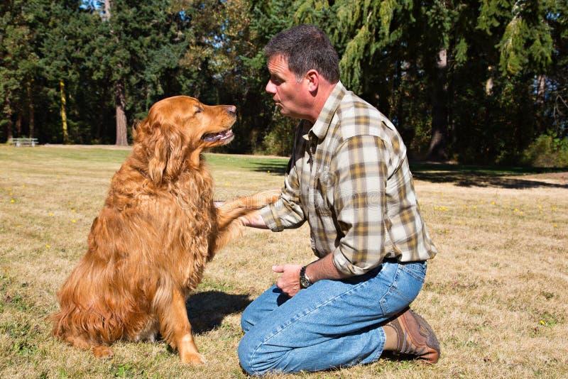 Obéissance formant le chien d'arrêt d'or photographie stock libre de droits