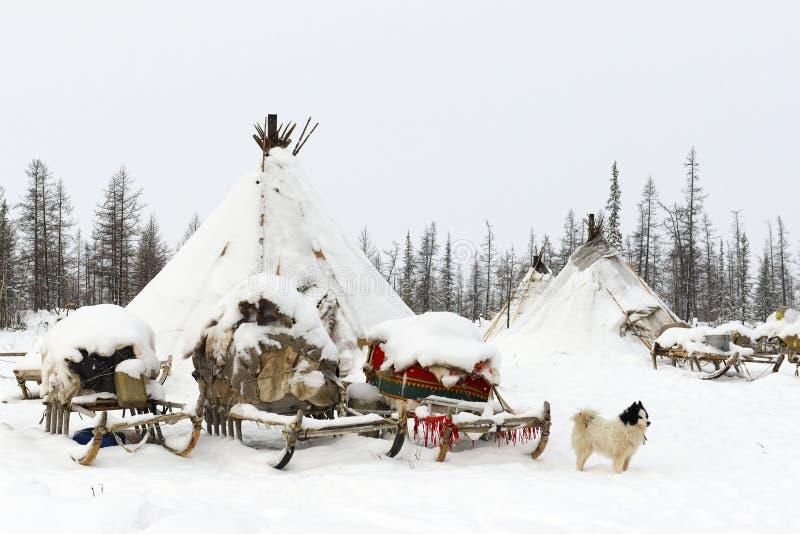 Obóz koczowniczy plemię w biegunowej tundrze zdjęcia stock