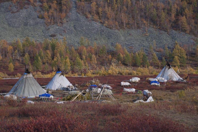 Obóz Nenets renifera poganiacze bydła zdjęcie royalty free