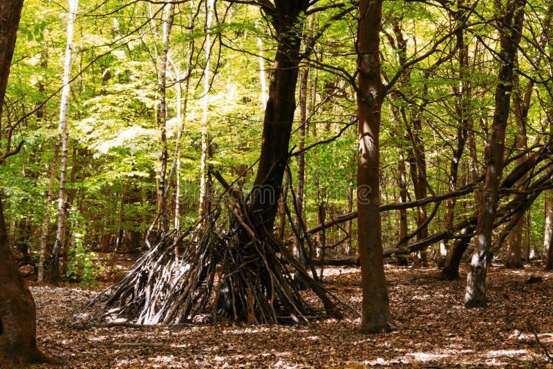 Obóz z gałąź w drewnach obrazy royalty free