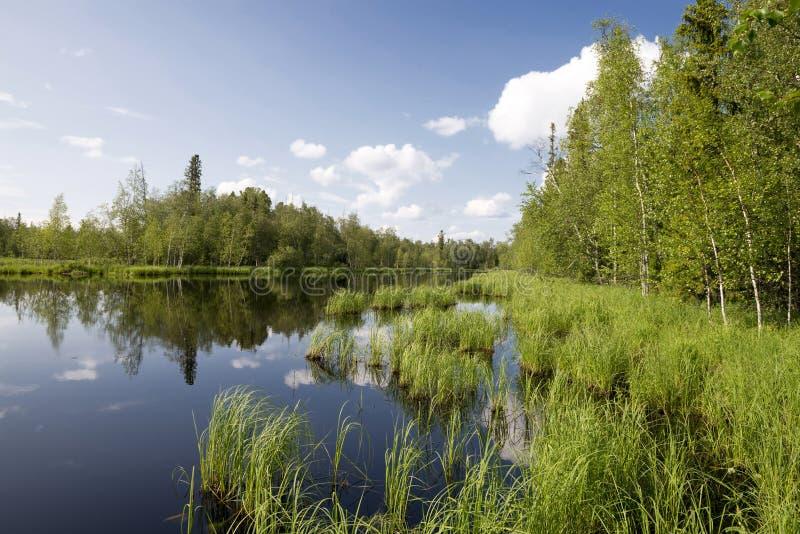 obłoczna lasowa jeziora krajobrazu odbicia sezonu wiosna dzika zdjęcie stock