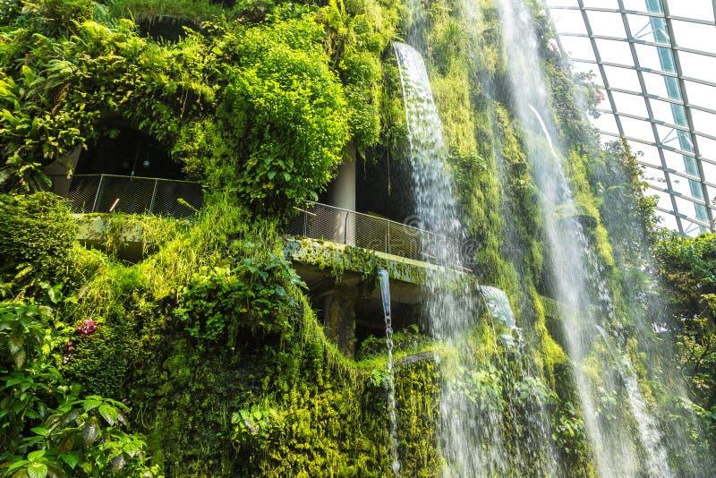 Obłoczna Lasowa kopuła w Singapur obraz stock