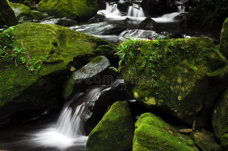 Obłoczna Lasowa siklawa fotografia stock