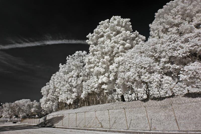 obłoczni pa podczerwieni zdjęć nieba tree obraz royalty free