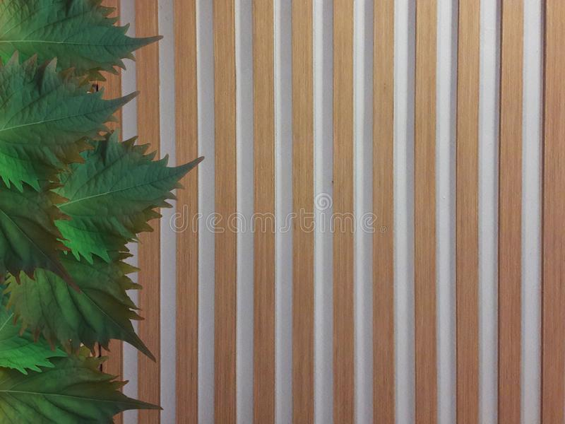Oba leaves on wooden fence. Decorative Oba leaves placed on brown wooden fence stock photography