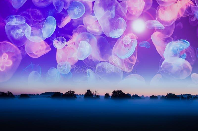 Obcy wymarzony pojęcie Mglisty wiejski wschód słońca z rozjarzonymi neonowymi jellyfish unosi się w niebieskim niebie nad zdjęcie stock