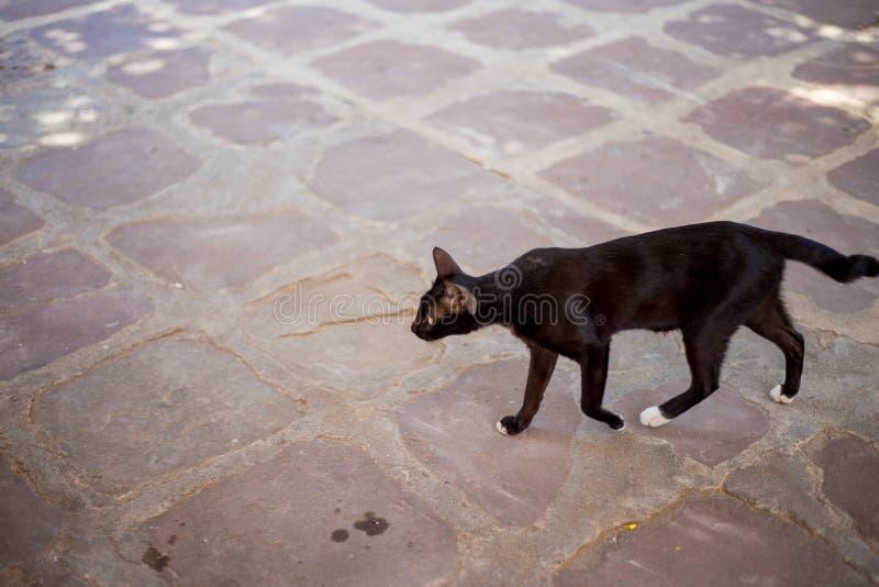 Obdachlose und arme schwarze Katze stockbilder