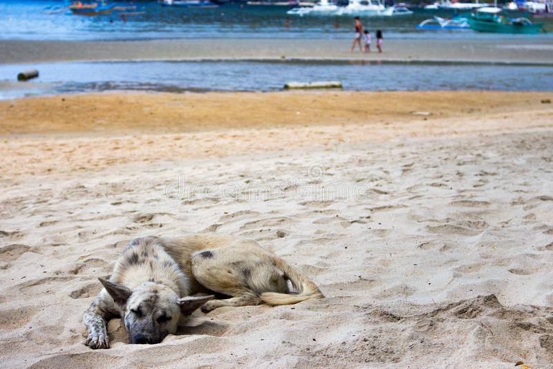 Obdachloser Hund auf dem Strand Schlafenhund auf Seeküste, Asien Entzückendes müdes Haustier am heißen Sommertag Grauer Hund, der stockfotos