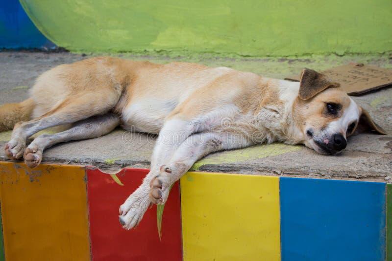 Obdachloser Hund auf der Stra?e Hund, der weg in der Stadt schaut Trauriges müdes Haustier Hund, der auf Boden liegt Obdachloses  lizenzfreie stockfotos