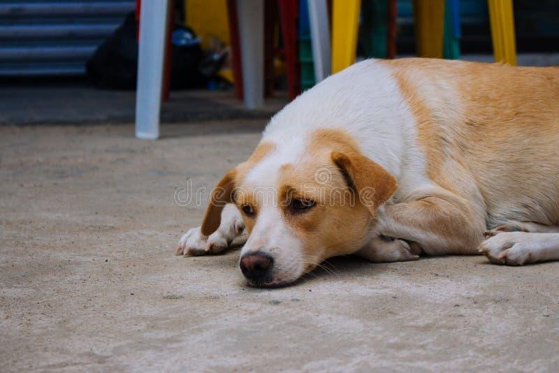 Obdachloser Hund auf der Stra?e Hund, der weg in der Stadt schaut Trauriges m?des Haustier Hund, der auf Boden liegt Obdachloses  lizenzfreie stockfotos
