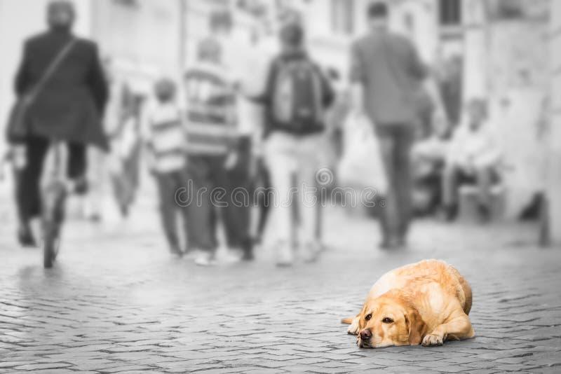 Obdachloser Hund mit den traurigen Augen, die auf einer Pflasterung liegen lizenzfreies stockfoto