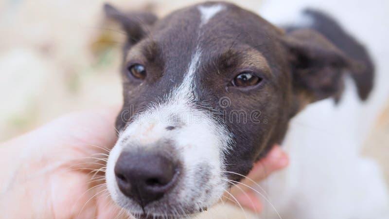 Obdachloser Hund, selektiver Fokus des jungen Hundes Kamera betrachtend lizenzfreies stockfoto