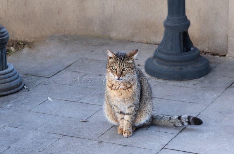 Obdachloser, Katze der getigerten Katze, die im Park sitzen und Warter-Nahrung stockfoto