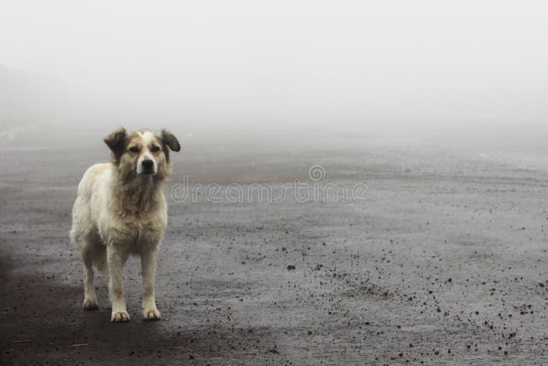 Obdachloser streunender Hund, der auf die Straße wartet lizenzfreie stockfotos