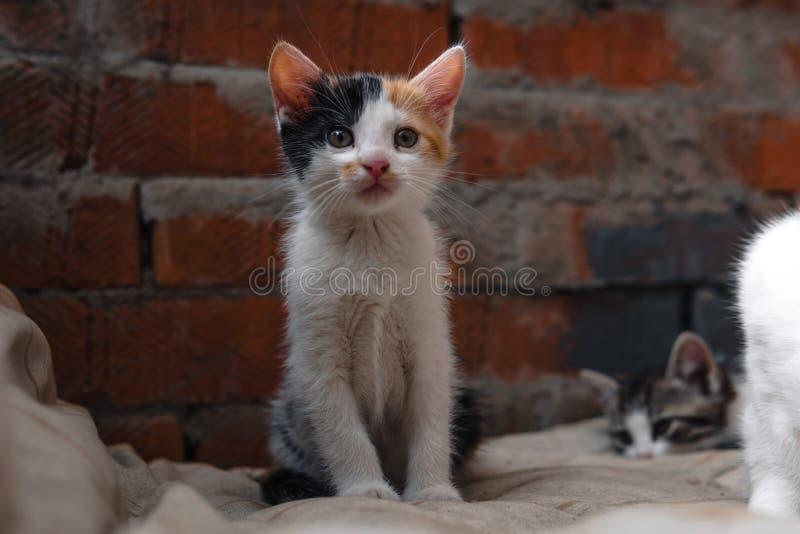 Obdachloses Kätzchen allein Katze, Katzen stra?e benötigen Sie Freunde lizenzfreies stockfoto