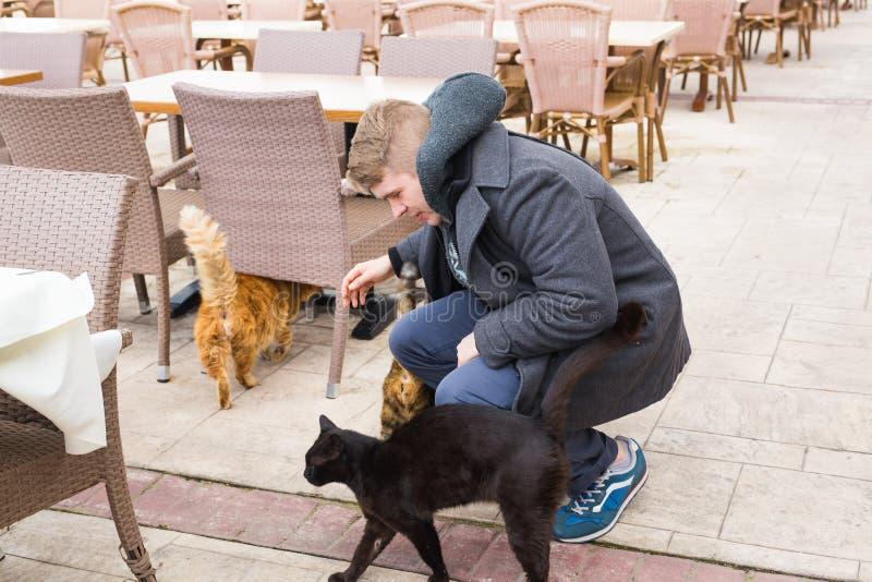 Obdachloses Katzen-, Haustier- und Tierkonzept - bemannen Sie das Streichen von Katzen stockfoto