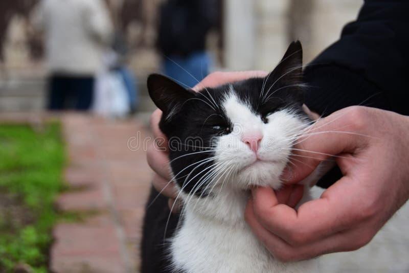 Obdachloses Katzen-, Haustier- und Tierkonzept - bemannen Sie streichelnden Katze ` s Kopf lizenzfreies stockfoto