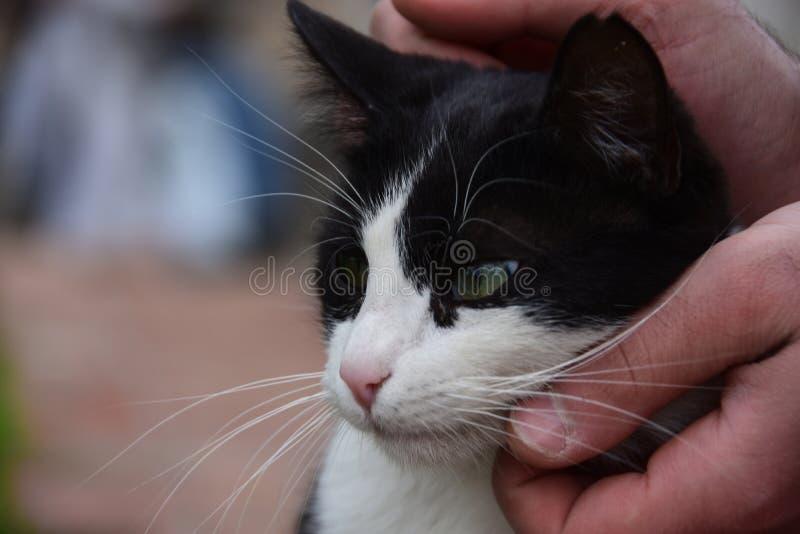Obdachloses Katzen-, Haustier- und Tierkonzept - bemannen Sie streichelnden Katze ` s Kopf stockfoto