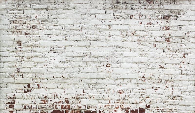 Obdzierająca cegły czerwieni ściana z farbą w bielu zdjęcie royalty free