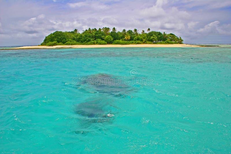 Obebodd ö i det tropiska paradiset av Fiji arkivbilder
