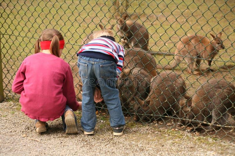 obecność zoo obraz stock