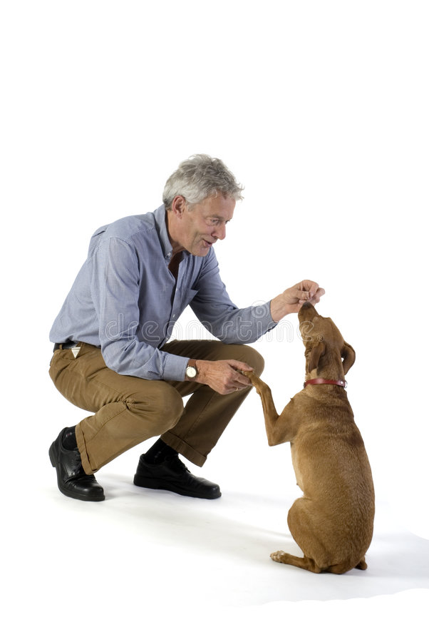 Obedience. Man is training obedience with little brown dog stock photography