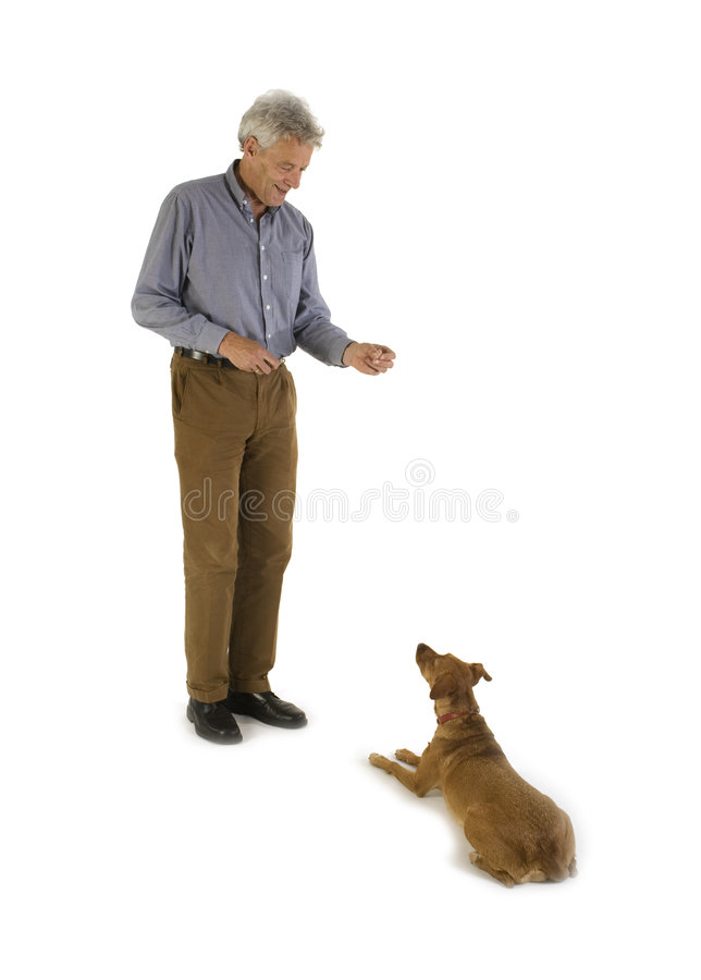 Obedience. Training obedience with a little brown dog royalty free stock photography