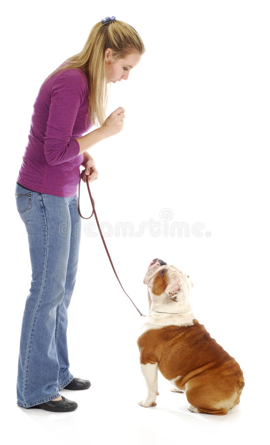 Obedience training. Woman teaching english bulldog to sit on white background stock image