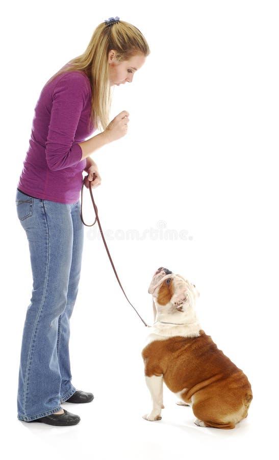obedienceutbildning fotografering för bildbyråer
